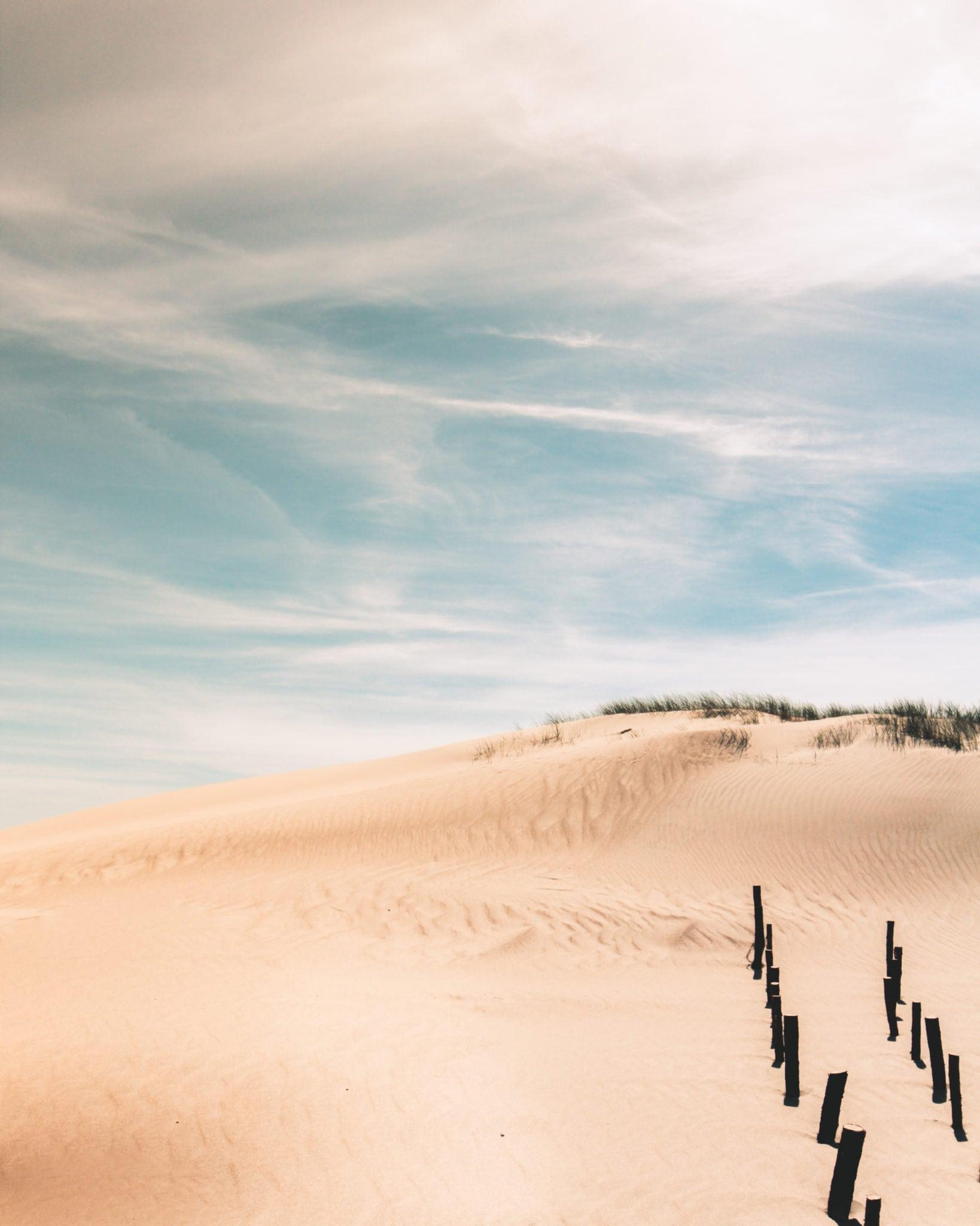 Desert New-2.jpg