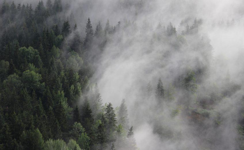 VCS Reforestation Project