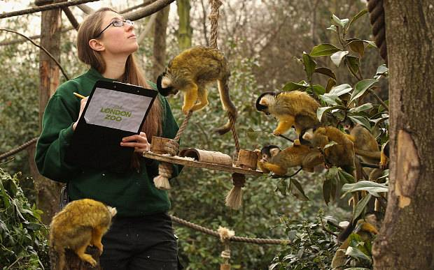 Zoologist Responsibilities - Best Zoos In The UK - Pros and Cons of Zoos