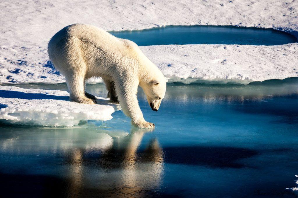 Ellesmere Island Wildlife